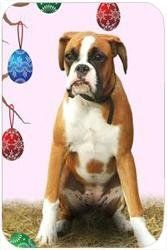 "Boxer Tempered Cutting Board Easter by Doggie of the Day. $29.99. Durable. Dishwasher Safe. Please allow 4 days to ship. 11.8"" x 7.87"" x 5/32"". Spice up your kitchen with a fabulous cutting board! These cutting boards are perfect for home chef's and restaurant owner's alike. This is a specially coated glass cutting board that is durable and dishwasher-safe."