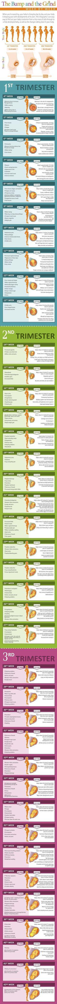 Pregnancy Week by Week Chart - Fun - - Schwanger - Pregnant Tips Pregnancy Chart, Pregnancy Info, Pregnancy Health, Pregnancy Weeks, Pregnancy Timeline, Pregnancy Stages, Pregnancy Trimester Chart, Pregnancy Facts, Early Pregnancy Signs