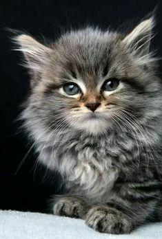 cute kitty - love colouring!