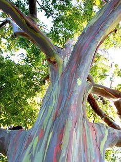 Rainbow Wood. #Rainbow