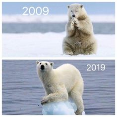 """Environmentalists Are Putting A Climate Change Twist On The - Funny memes that """"GET IT"""" and want you to too. Get the latest funniest memes and keep up what is going on in the…More Save Planet Earth, Save Our Earth, Our Planet, Save The Planet, The Animals, Photo Choc, Global Warming Climate Change, Save Mother Earth, Save Environment"""