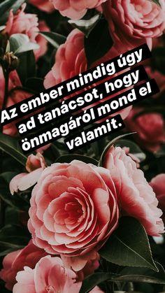 Az ember.. Rose, Flowers, Plants, Pink, Plant, Roses, Royal Icing Flowers, Flower, Florals