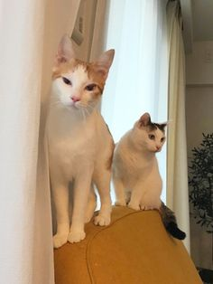 チラ見 | うちの猫がまた変なことしてる。【猫まんが】