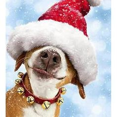 Funny Christmas Animals Dogs 70 Ideas For 2019 Love My Dog, Animals And Pets, Funny Animals, Cute Animals, Christmas Animals, Christmas Humor, Christmas Cards, Xmas, Christmas Pets