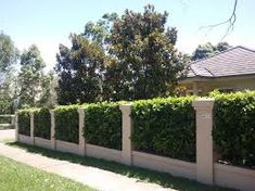 Image result for wall with pillars and hedge behind
