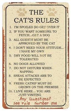 Cat Rules Tin Sign Emaille bord bij AllPosters.nl