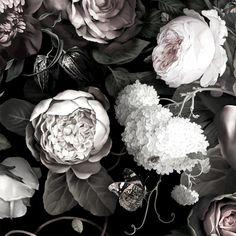 Dark Floral II Black Desaturated Wallpaper - by Ellie Cashman Design