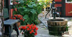 Water Issues, Vegetable Garden, Backyard, Plants, Patio, Vegetables Garden, Backyards, Vegetable Gardening, Plant