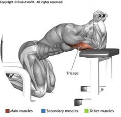 TRICEPS - KNEELING CABLE TRICEPS EXTENSION