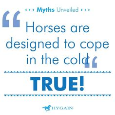 The horse's thick winter coat has an insulating effect against cold and wind. In addition, horses in good body condition prior to winter months will be able to use the extra body fat as an additional insulating effect against wind and also serves them as an energy reserve.