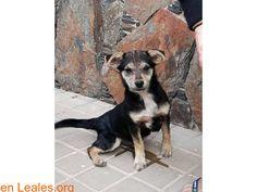 Perros encontrados  España  Las Palmas - Gran Canaria   Otra ciudad en Las Palmas - Gran Canaria March 08 2018 at 12:56AM   ver foto  #PERDIDO #ENCONTRADO  Contacto y Info: https://leales.org/perdidos-o-encontrados/perros-encontrados_1/ver-foto_i3642 #Difunde en #LealesOrg un #adopta y sé #acogida para #AdoptaNoCompres O un #SeBusca de #perro o #gatos ℹ En todos los navegadores: Leales.org y en todas las redes sociales: @lealesorg   Acerca de esta publicación:  Esta publicación NO ha sido…