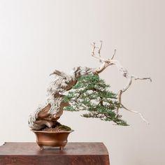Bonsai Gallery | Bonsai Mirai