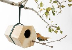Get Out! NeighBirds by Andreu Carulla Studio for Utoopic
