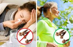 Cloves are the unopened fragrant pink flower buds of the evergreen clove tree native to Indonesia. Plastic Surgery Gone Wrong, Prevent Constipation, Celebrity Plastic Surgery, Clove Oil, Healthy Liver, Headache Remedies, Evergreen, Health Benefits, Pink Flowers