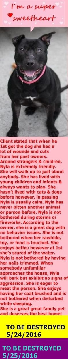 RETURNED 6/14/16 PET CONFL SUPER URGENT Brooklyn Center  SAFE❤️❤️ 5/25/16 Brooklyn Center My name is NYLA. My Animal ID # is A1073506. I am a female black am pit bull ter mix. The shelter thinks I am about 5 YEARS old. I came in the shelter as a OWNER SUR on 05/12/2016 from NY 11418, owner surrender reason stated was MOVE2PRIVA. http://nycdogs.urgentpodr.org/2016/05/nyla-a1073506/