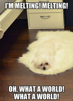 OMG thank goodness that the dogs not actually melting its just a rug!