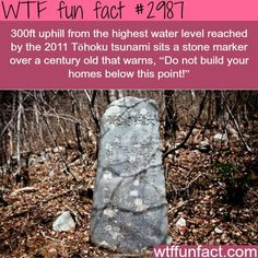 Tsunami fact that will blow your mind - WTF fun facts. Hmmm so why was it ignored? Wtf Fun Facts, True Facts, Funny Facts, Random Facts, Strange Facts, Random Stuff, Creepy Facts, The More You Know, Good To Know