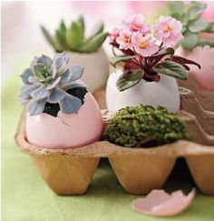 Dyed or natural eggs make the perfect pot for small succulents in this fantastic decor idea.  Easter crafts, recipes, and dyeing techniques can be found at http://paaseastereggs.com.