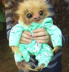 In case of bad day: Hehe's a picture of a baby sloth in a pyjama : ©Lee cross
