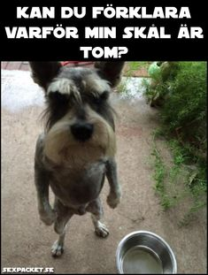 Here are 11 pictures of dogs that will make you both smile and laugh. Animals And Pets, Funny Animals, Cute Animals, Dog Pictures, Funny Pictures, Funny Pics, Funny Jokes, Funny Horror, Real Dog