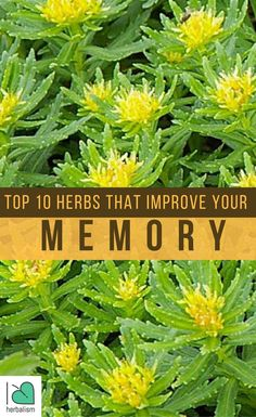 You could protect your brain from too much needs of the modern-day world or even safeguard it from brain related illness, such as dementia or Alzheimer's, by eating some of the natural herbs that are recognized to enhance the function of the brain.