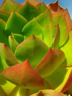 Macro Photography Different Shades Of Red, Macro Photography, Watermelon, Succulents, Green, Flowers, Plants, Beautiful, Succulent Plants