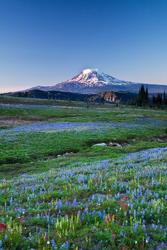 Mount Adams (Washington State) from a wildflower meadow along the Pacific Crest Trail by Lee Rentz, via Flickr.