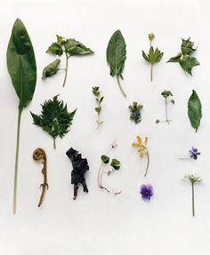 17 best cress flowers and garnishes images cress florals vegetables rh pinterest com