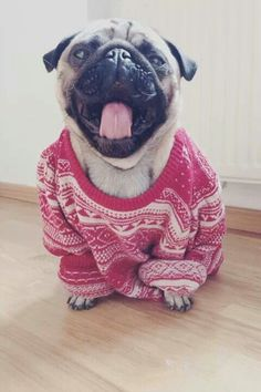 sleepy sweater puggy