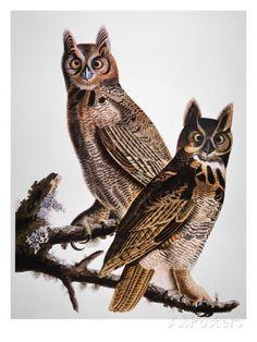 Audubon: Owl Print by John James Audubon at AllPosters.com