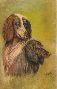 AS: Portrait of two Pointer dogs, 1900-10s