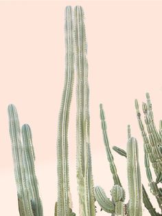 Large Desert Cactus Fine Art Photography Home by WilderCalifornia