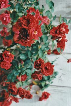 Floralls: Painting The Roses Red (by Annie Elizabeth Smith) Red Flowers, Red Roses, Blooming Flowers, Painting The Roses Red, Beautiful Roses, Flower Power, Planting Flowers, Greenery, Floral Design