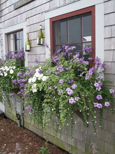 Trendy Backyard Landscaping Before And After Window Boxes 60 Ideas Window Box Flowers, Pot Jardin, Window Planter Boxes, Fall Window Boxes, Plants For Window Boxes, Planter Ideas, Garden Windows, Garden Cottage, Garden Planters