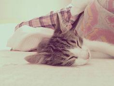 #cat #lover #cutiest #thing