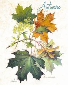 Autumn Fall Paper Leaf die cuts Chestnut Oak Maple leaves Spice Market 90 cuts