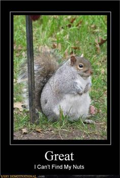 Not crazy about the caption, but this is really the chubbiest squirrel I've ever seen!