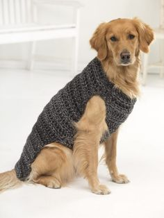 Hundepullover+stricken+mit+Zopfmuster
