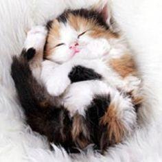 Ball of precious fur.