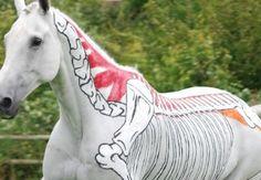 Equine massage...