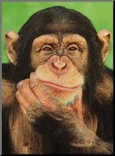 Are you monkey smart of smarter than a monkey? A monkey experiment about mob mentality & how we jump on others not even knowing why. Primates, Mammals, Animals And Pets, Baby Animals, Funny Animals, Cute Animals, Smiling Animals, Exotic Animals, Beautiful Creatures