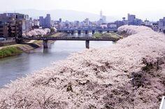 一度は見たい!美しすぎる春の絶景!全国のおすすめ桜名所30選【2017】