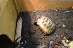 Nora the tortoise