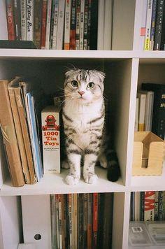 cats + books = heaven