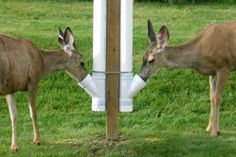 DIY: Build a PVC Deer Feeder.Also Great for Deer or Goat Minerals. visit for all your feed and hunting needs! Pvc Deer Feeder, Dog Feeder, Deer Feeder Plans, Bird Feeders, Homemade Deer Feeders, Deer Hunting Tips, Hunting Cabin, Hunting Stuff, Hunting Gear