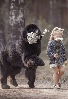 Dogs that are treated properly have the best temperaments and they hold no reservations in showing the love they have received. 5 Ways How To Show Your Dog Love Dogs And Kids, Animals For Kids, Cute Baby Animals, I Love Dogs, Animals And Pets, Funny Animals, Cute Big Dogs, Photos With Dog, Family Photos