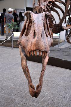 Tyrannotitan Chubutensis