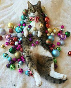 Festive xmas kitty
