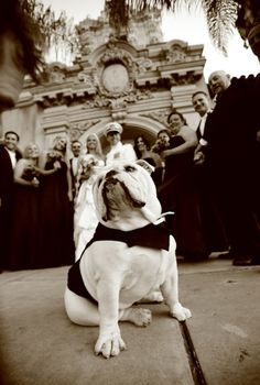 bulldog at the wedding...:) ... This will be sushi, if he ever calms down!