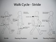 walkcycle-stride